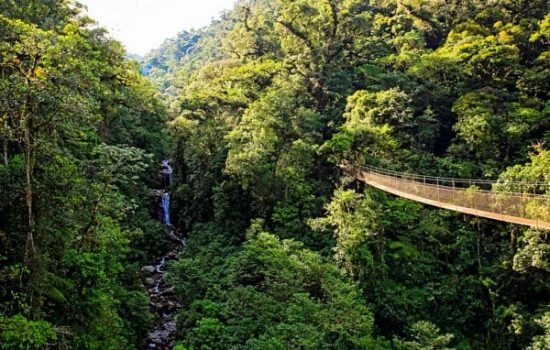 Foto destacada Tour Programa Sandoval Rain Forest 4 días 3 noches