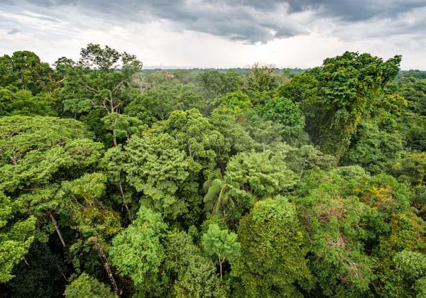foto destacada Tambopata programa collpa 3 dias 2 noches