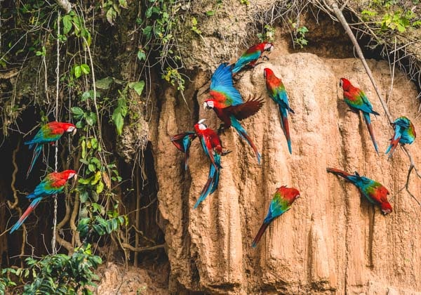 Foto destacada Tour a la Selva Programa Tarantula 6 días y 5 noches
