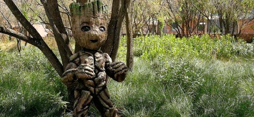 En el Humedal de Huasao podrás observar a Groot y otros personajes de la película Avengers y Señor de los Anillos