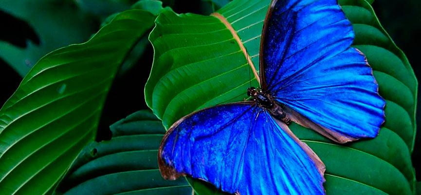 Este mágico lugar alberga más de 300 especies de mariposas